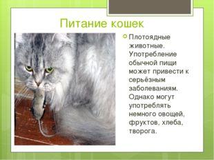Питание кошек Плотоядные животные. Употребление обычной пищи может привести