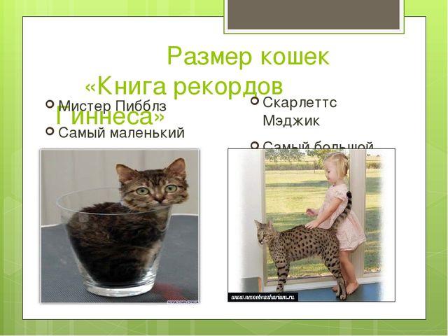 Размер кошек «Книга рекордов Гиннеса» Мистер Пибблз Самый маленький кот 1,3...
