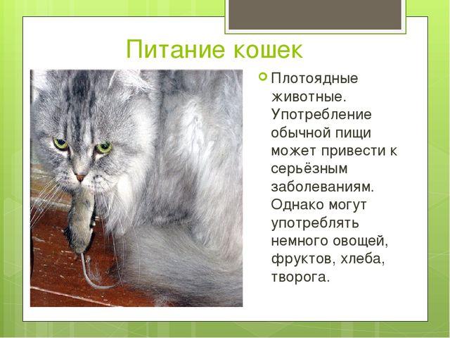 Питание кошек Плотоядные животные. Употребление обычной пищи может привести...