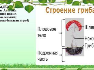 Загадка Стоит Антошка на одной ножке, сам маленький, а шляпа большая. (гриб)