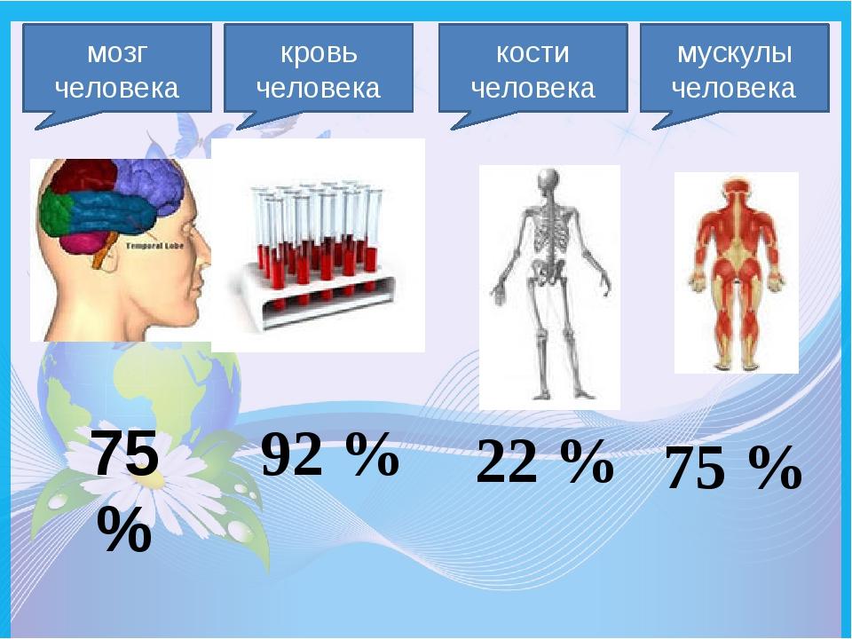 мозг человека 75 % кровь человека 92 % кости человека 22 % мускулы человека 7...