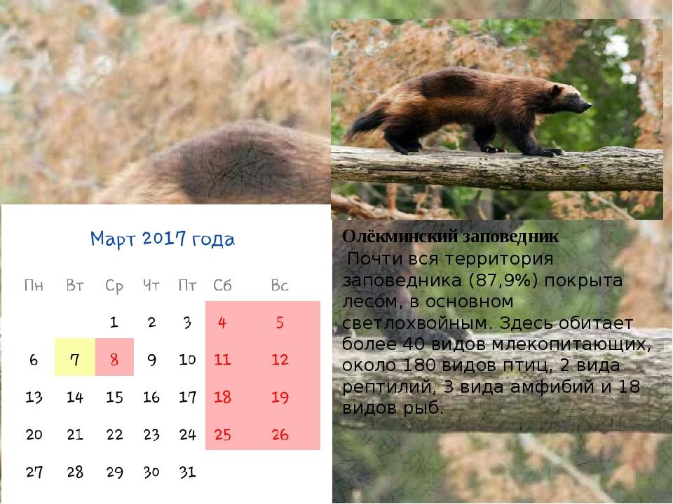 Олёкминский заповедник Почти вся территория заповедника (87,9%) покрыта лесом...
