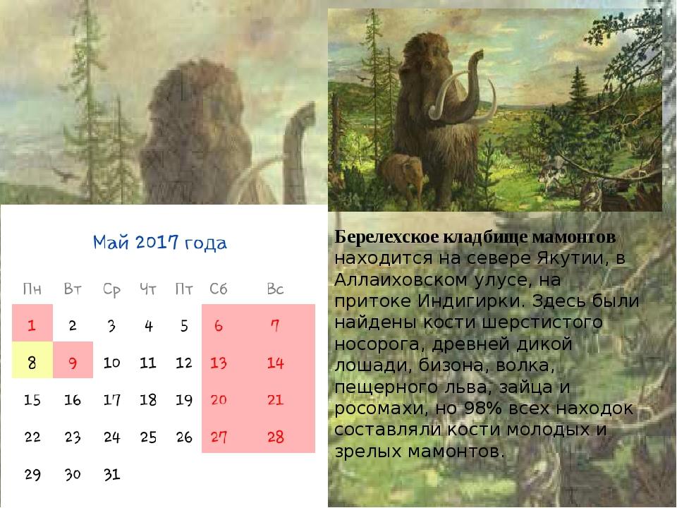 Берелехское кладбище мамонтов находится на севере Якутии, в Аллаиховском улус...