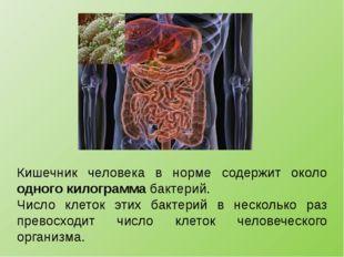 Кишечник человека в норме содержит около одного килограмма бактерий. Число кл