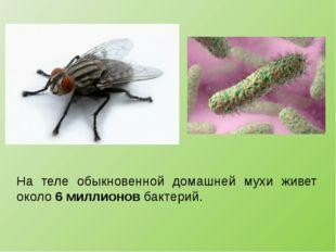 На теле обыкновенной домашней мухи живет около 6 миллионов бактерий.