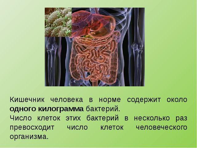 Кишечник человека в норме содержит около одного килограмма бактерий. Число кл...