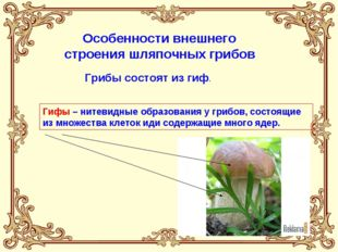 Особенности внешнего строения шляпочных грибов Грибы состоят из гиф. Гифы –