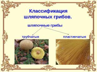 трубчатые пластинчатые Классификация шляпочных грибов. шляпочные грибы