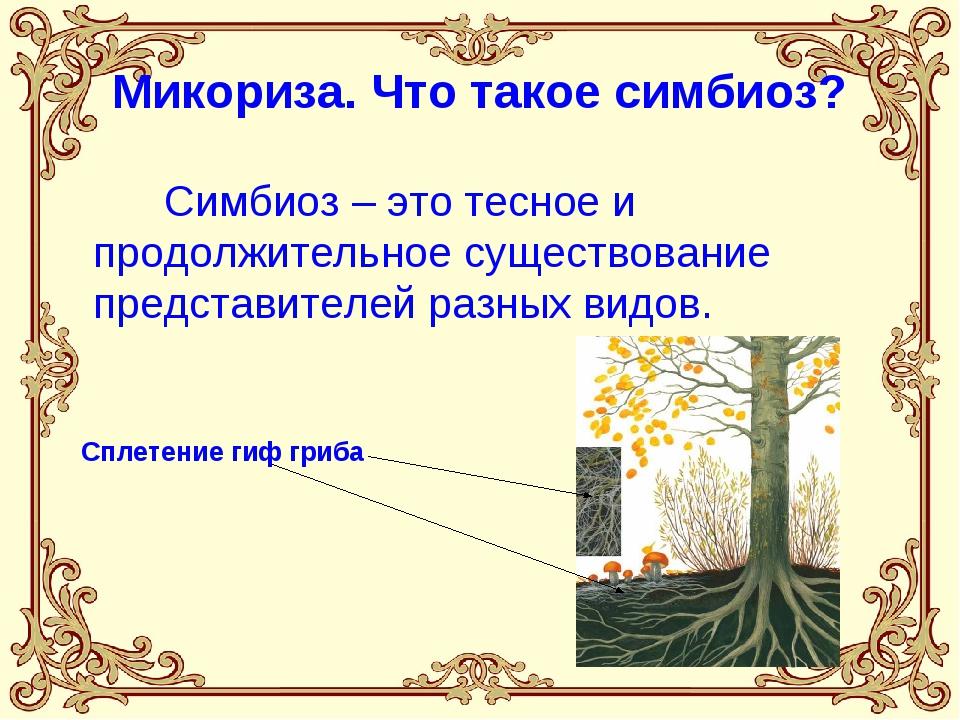 Микориза. Что такое симбиоз? Симбиоз – это тесное и продолжительное существов...