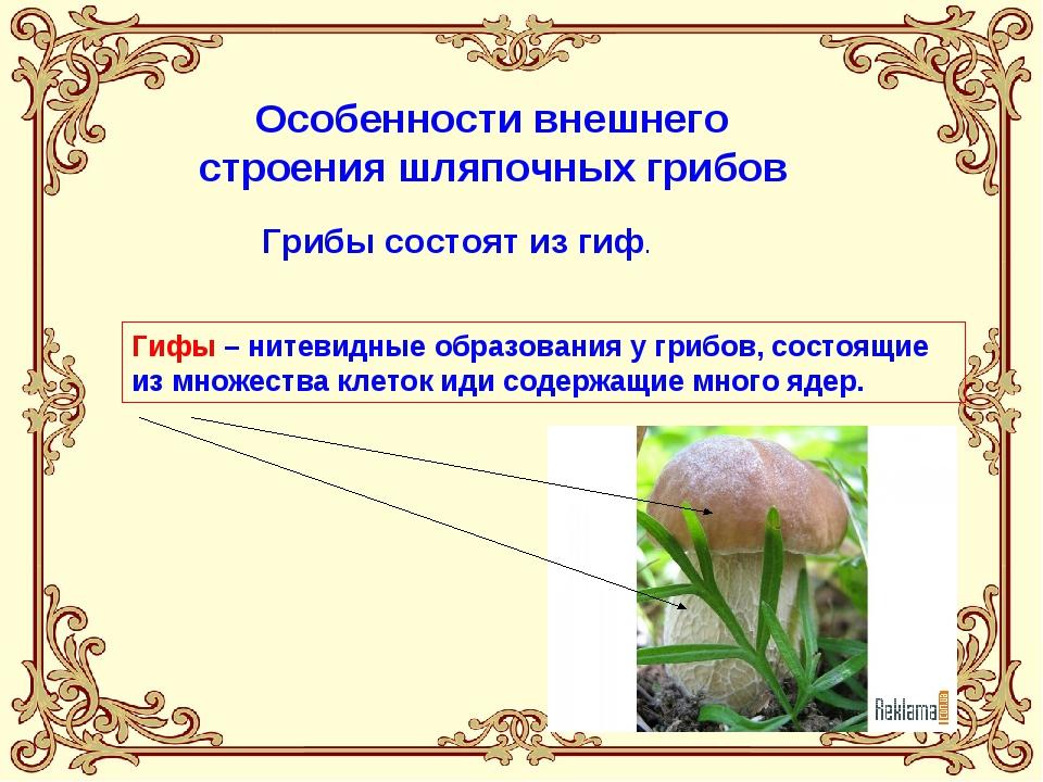 Особенности внешнего строения шляпочных грибов Грибы состоят из гиф. Гифы –...