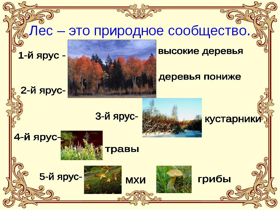 Лес – это природное сообщество.