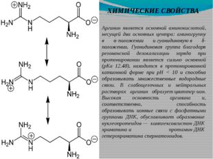 ХИМИЧЕСКИЕ СВОЙСТВА Аргинин является основной аминокислотой, несущей два осно