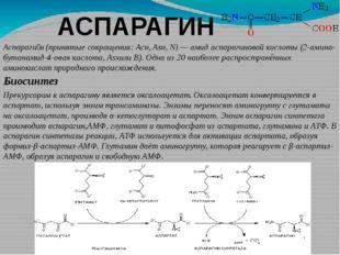 АСПАРАГИН Аспараги́н(принятые сокращения:Асн,Asn,N)—амидаспарагиновой