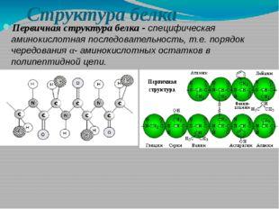 Структура белка Первичная структура белка - специфическая аминокислотная посл