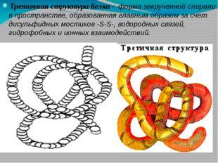 Третичная структура белка - форма закрученной спирали в пространстве, образов