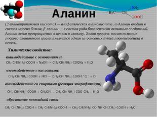 Аланин (2-аминопропановая кислота)—алифатическаяаминокислота. α-Аланин вхо