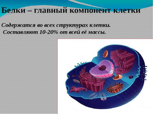 Содержатся во всех структурах клетки. Составляют 10-20% от всей её массы. Бел...