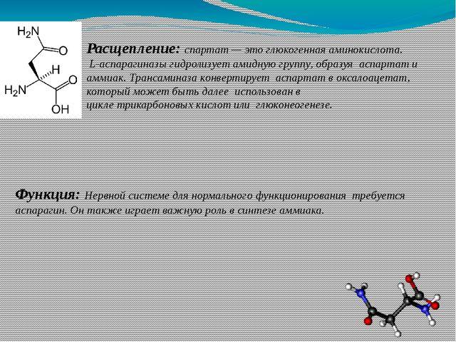 Расщепление: спартат— это глюкогенная аминокислота. L-аспарагиназыгидролиз...