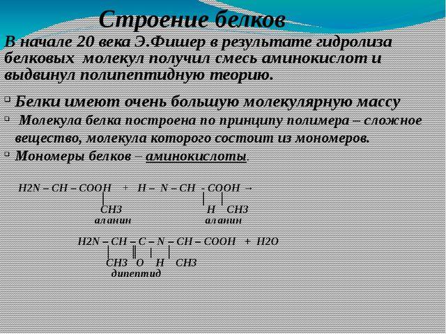 Строение белков Белки имеют очень большую молекулярную массу Молекула белка п...