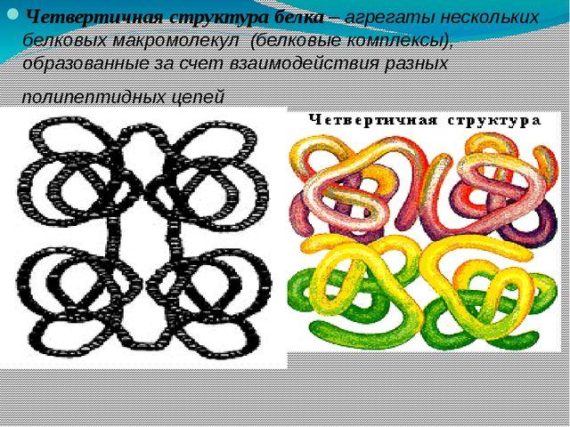 Четвертичная структура белка – агрегаты нескольких белковых макромолекул (бел...