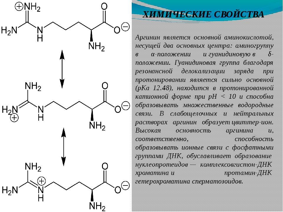 ХИМИЧЕСКИЕ СВОЙСТВА Аргинин является основной аминокислотой, несущей два осно...