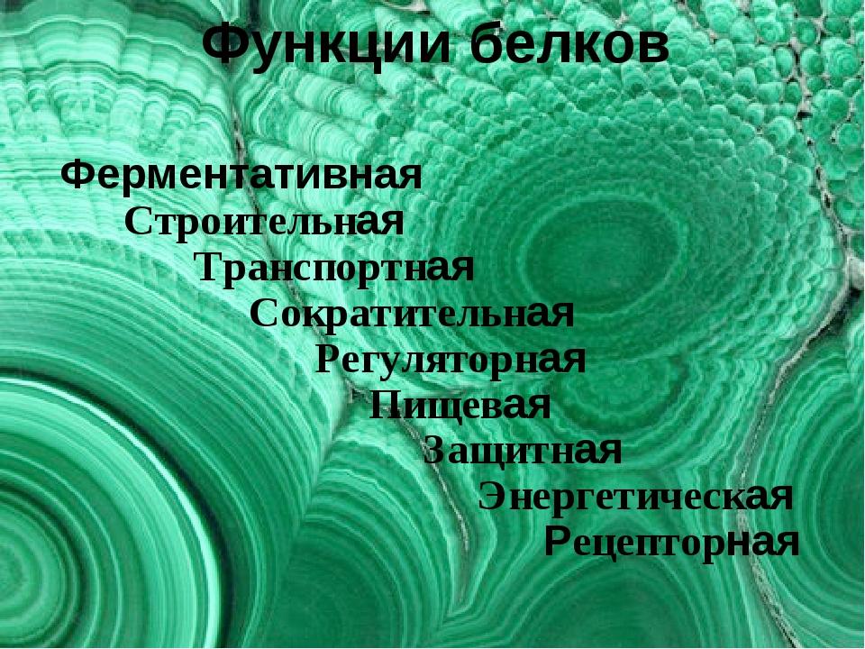 Функции белков Ферментативная Строительная Транспортная Сократительная Регуля...