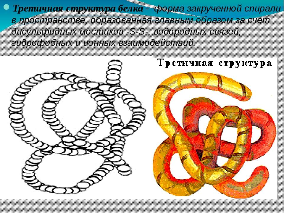 Третичная структура белка - форма закрученной спирали в пространстве, образов...