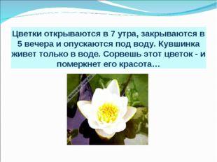 Цветки открываются в 7 утра, закрываются в 5 вечера и опускаются под воду. Ку