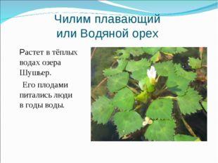 Чилим плавающий или Водяной орех Растет в тёплых водах озера Шушьер. Его плод