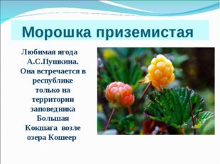 Морошка приземистая Любимая ягода А.С.Пушкина. Она встречается в республике т