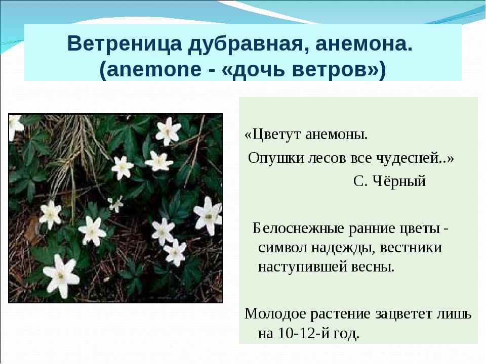 Ветреница дубравная, анемона. (anemone - «дочь ветров») «Цветут анемоны. Опуш...