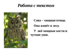 Работа с текстом Сова – хищная птица. Она живёт в лесу. У неё мощные когти и