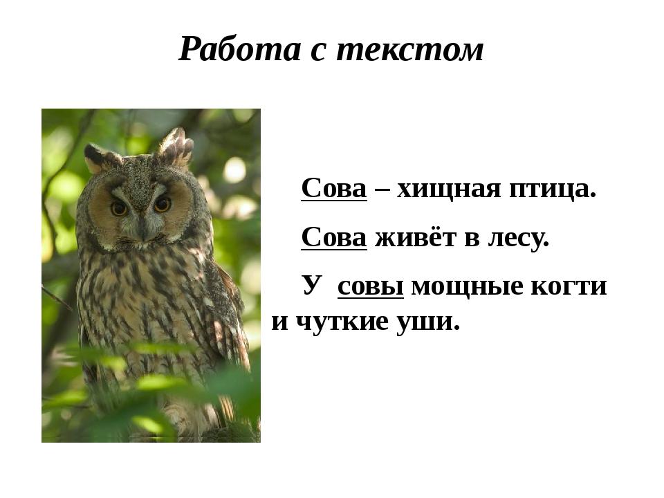 Работа с текстом Сова – хищная птица. Сова живёт в лесу. У совы мощные когти...