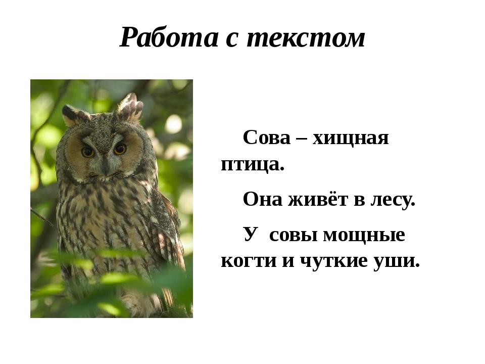 Работа с текстом Сова – хищная птица. Она живёт в лесу. У совы мощные когти и...