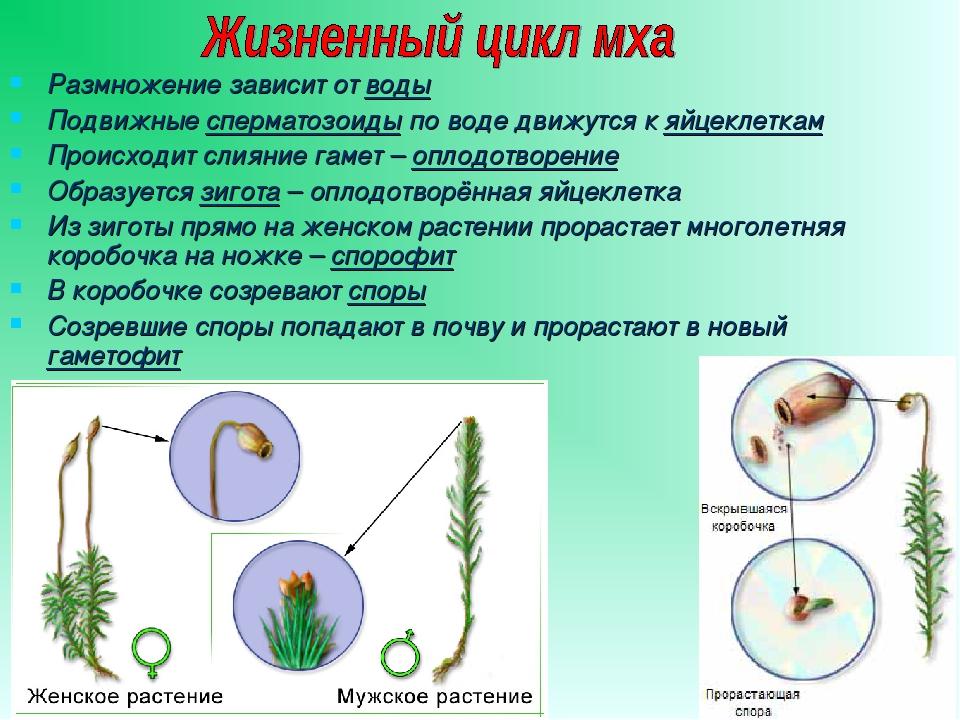 malaya-podvizhnost-spermatozoida