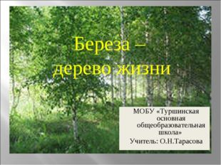 Береза – дерево жизни МОБУ «Туршинская основная общеобразовательная школа» Уч