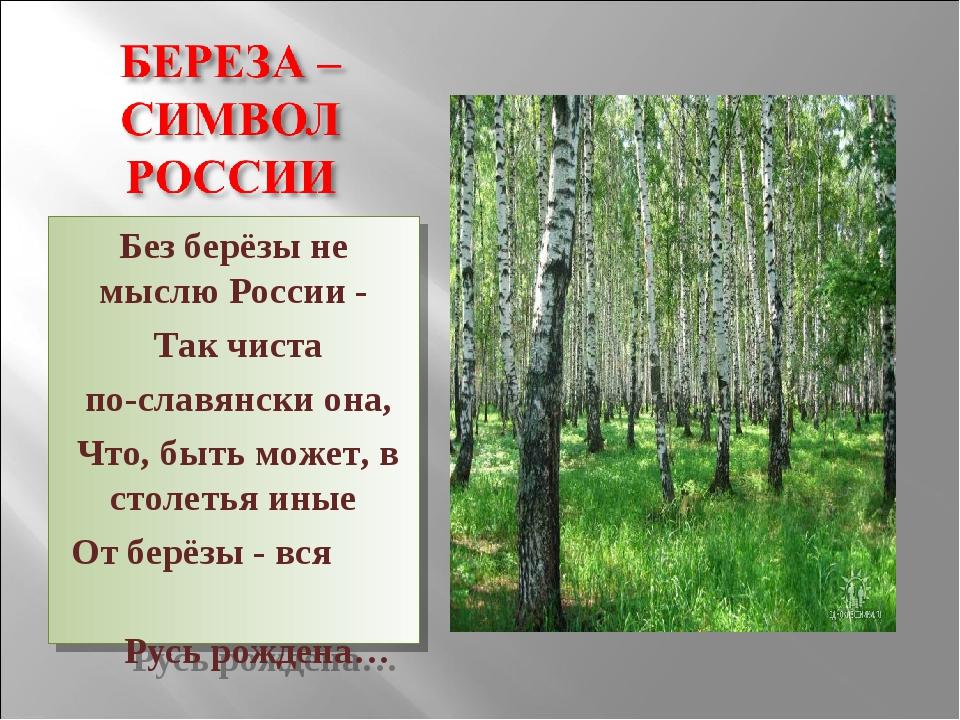 Без берёзы не мыслю России - Так чиста по-славянски она, Что, быть может, в с...
