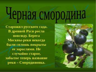 Старожил русского сада. В древней Руси росла повсюду. Берега Москвы-реки неко