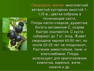 Смородина черная- многолетний ветвистый кустарник высотой 1-1,15 м., цветки с