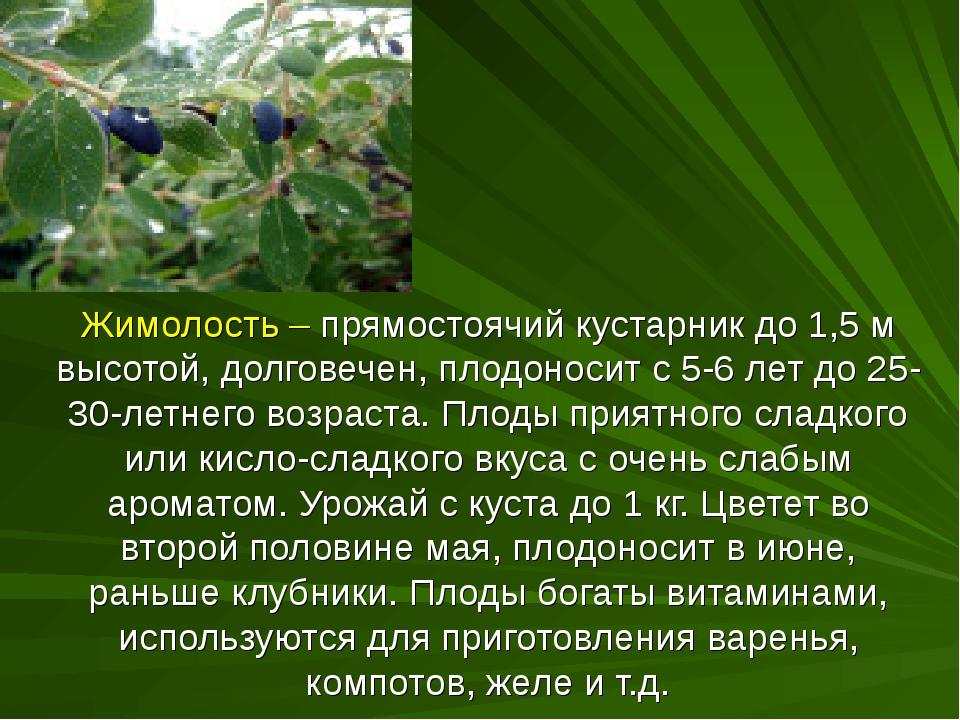 Жимолость – прямостоячий кустарник до 1,5 м высотой, долговечен, плодоносит с...
