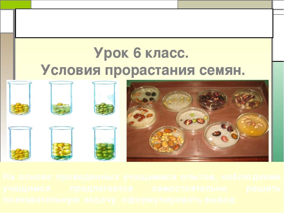 Урок 6 класс. Условия прорастания семян. На основе проведенных учащимися опыт...