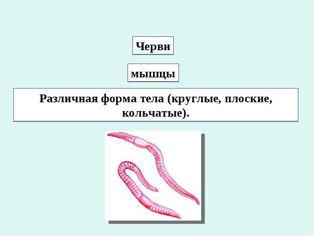 Черви мышцы Различная форма тела (круглые, плоские, кольчатые).