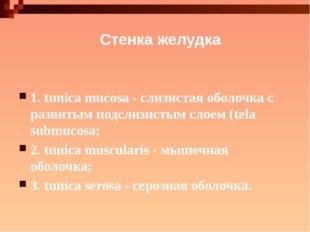 Стенка желудка 1. tunica mucosa - слизистая оболочка с развитым подслизистым