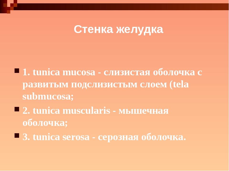 Стенка желудка 1. tunica mucosa - слизистая оболочка с развитым подслизистым...