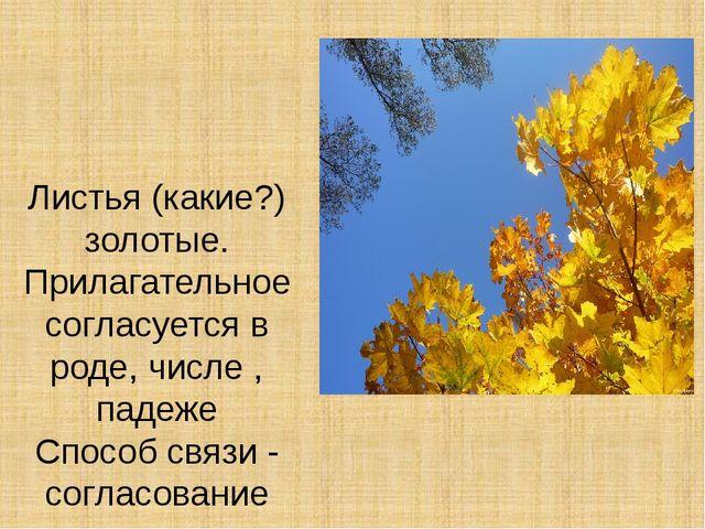 Листья (какие?) золотые. Прилагательное согласуется в роде, числе , падеже Сп...