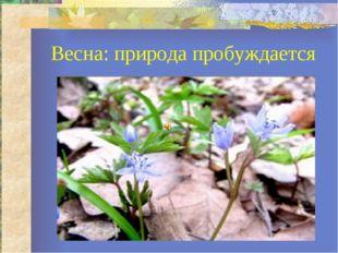 Весна: природа пробуждается