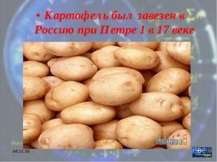 * Картофель был завезен в Россию при Петре 1 в 17 веке