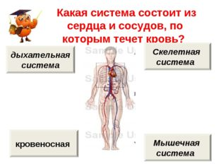 Какая система состоит из сердца и сосудов, по которым течет кровь? кровеносн