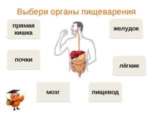 Выбери органы пищеварения прямая кишка пищевод желудок лёгкие почки мозг