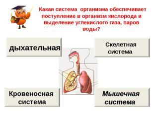 Какая система организма обеспечивает поступление в организм кислорода и выде